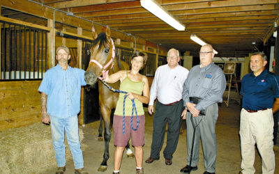 Offering Veterans Equine Therapy