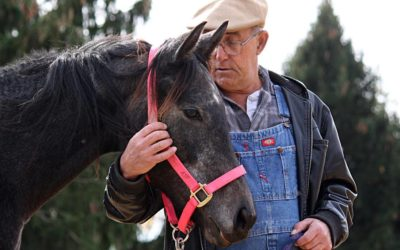 Research summary on efficacy of equine assisted therapy using the EAGALA model