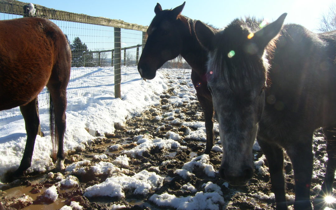 See Some of Our Horses!