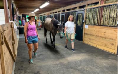 Horse Handler Network Services